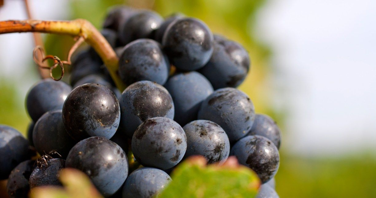 How many grapes does it take to make a bottle of wine?